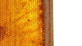 蜂窝透露用在蜡框架的蜂蜜  股票录像