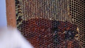 蜂窝透露用在黑暗的蜡框架的蜂蜜  影视素材
