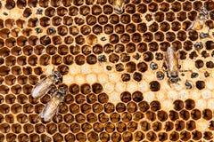 蜂箱和蜂 免版税库存照片