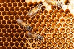 蜂箱和蜂 免版税库存图片