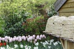 蜂箱在庭院里 库存照片