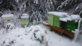 蜂箱在用深雪包括的冬天 库存图片