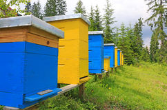 蜂箱在草甸 库存图片