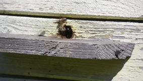 从蜂箱蜜蜂飞行并且离开 免版税库存图片