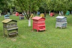 蜂箱行在果树的从事园艺 免版税图库摄影
