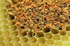 蜂花粉 免版税库存图片