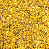 蜂花粉 库存照片