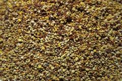 蜂花粉 库存图片
