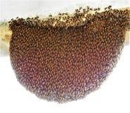 蜂蜂房在我们的庭院里 库存图片