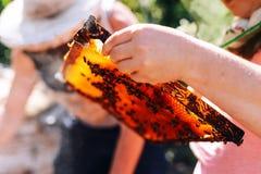 蜂蜂房的框架 收获蜂蜜的蜂农 蜂吸烟者 库存图片