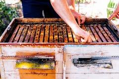 蜂蜂房的框架 收获蜂蜜的蜂农 蜂吸烟者 免版税库存照片