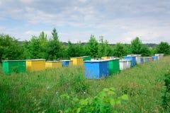 蜂蜂房箱子 蜂房位于在森林边缘 库存照片