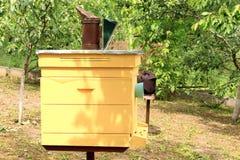 蜂蜂房 图库摄影