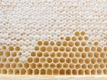 蜂蜂窝 图库摄影