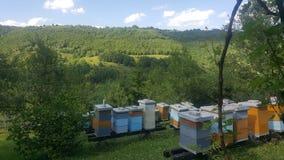 蜂蜂箱绿色eco 库存图片