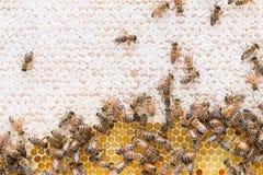 蜂蜜和开放花蜜框架  库存图片