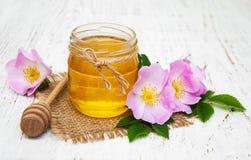 蜂蜜和狗玫瑰色花 库存照片