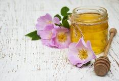 蜂蜜和狗玫瑰色花 免版税图库摄影