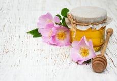蜂蜜和狗玫瑰色花 免版税库存照片
