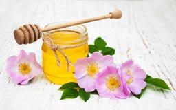 蜂蜜和狗玫瑰色花 免版税库存图片