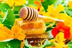 蜂蜜和花 库存图片