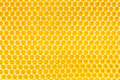 蜂蜜在蜂窝背景中 库存图片