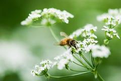 蜂蜜季节 免版税图库摄影