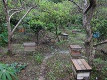 蜂蜜庭院 库存图片