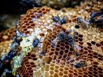 蜂蜜您去 免版税库存照片