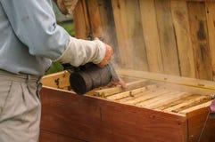 蜂蜜是健康和身体的好食物 免版税库存照片