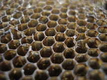 蜂蜜梳子宏指令 免版税库存图片