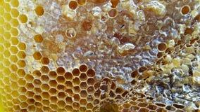 蜂蜜梳子特写镜头 免版税库存图片