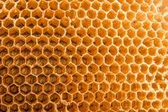 蜂蜜梳子蜂家 库存图片