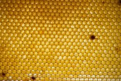 蜂蜜梳子 蜂窝,抽象背景的片段 库存图片