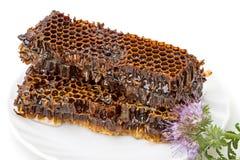 蜂蜜梳子 图库摄影