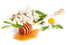 蜂蜜棍子用在白色背景和花隔绝的金合欢春黄菊流动的蜂蜜 免版税库存照片