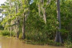蜂蜜海岛与水和树的沼泽游览在新奥尔良,路易斯安那 免版税图库摄影