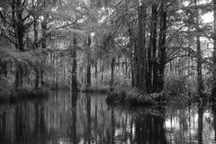 蜂蜜海岛沼泽 库存照片