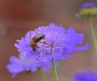 蜂蜜猎人 库存照片