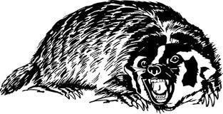 蜂蜜獾 免版税图库摄影