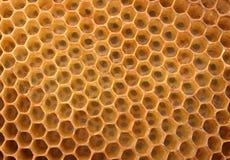 蜂蜜纹理 免版税库存图片