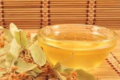 蜂蜜菩提树 免版税库存照片