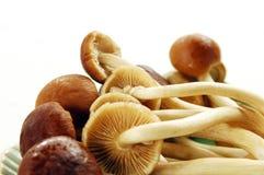 蜂蜜蘑菇 免版税图库摄影