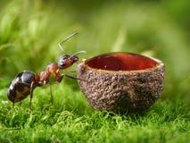 蜂蜜蚂蚁和下落在杯子 免版税库存图片