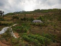 蜂蜜蜂农场在中国 图库摄影