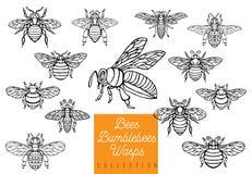 蜂蜜蜂土蜂黄蜂设置了剪影样式汇集插入物wi 免版税库存照片