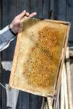 蜂蜜蜂窝在蜂农的一只手上 库存照片