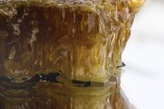 蜂蜜蜂窝 免版税库存照片