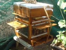蜂蜜蜂箱子 库存图片