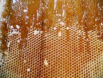 蜂蜜 免版税库存照片